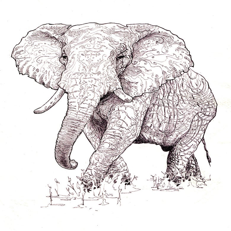 Elephant Drawing Image of Elephant Drawing