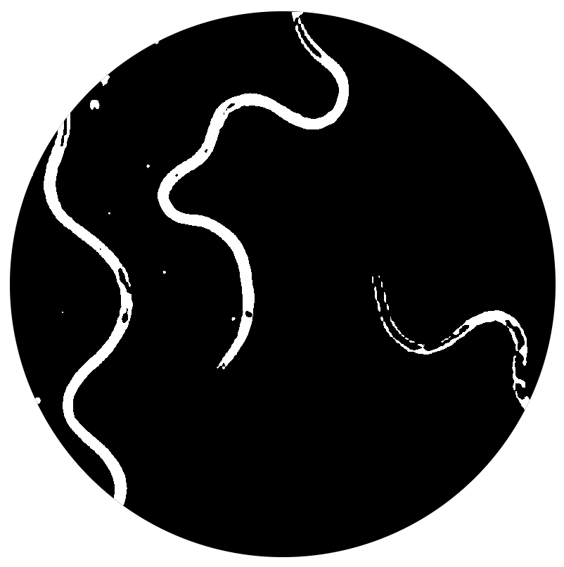 Image of Grindal Worm