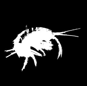 Image of Gammarus Shrimp