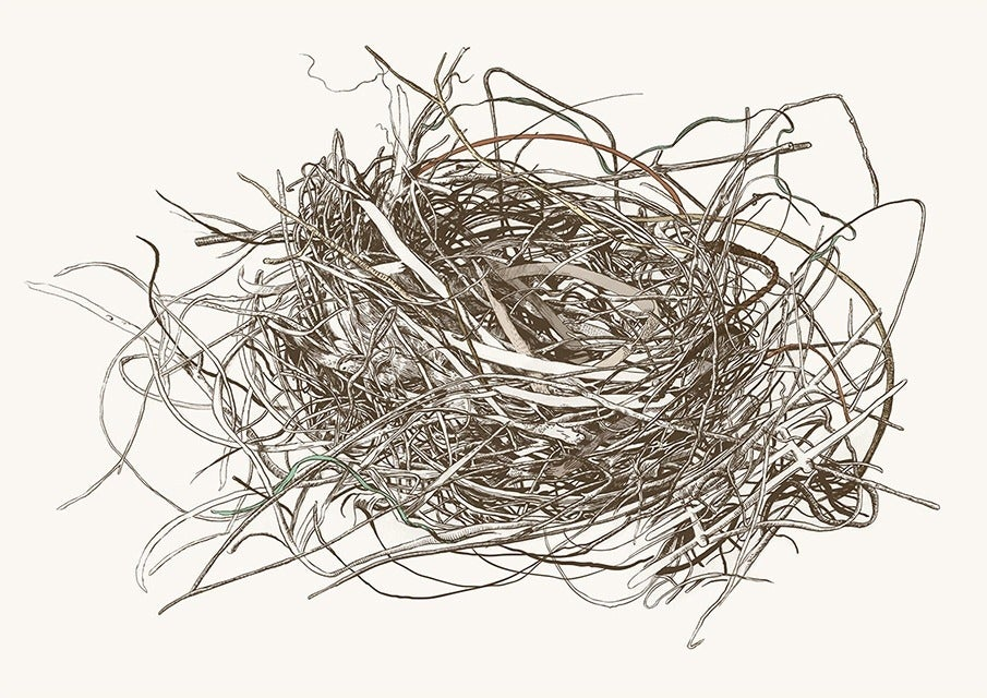Image of Nest Study