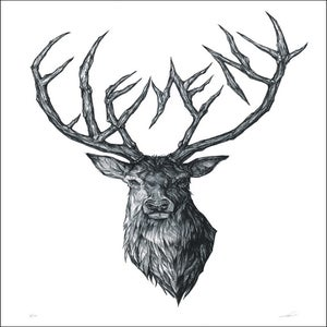 Image of STAG