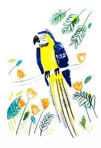 Image of Parrotdise