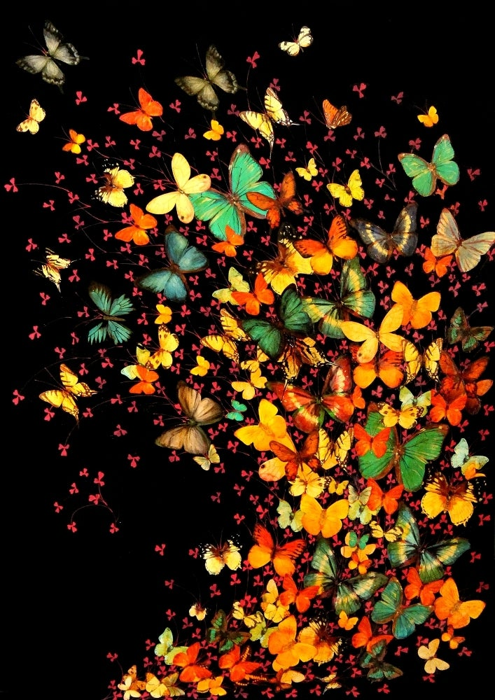 Image of Lily Greenwood Signed Giclée Print - Butterflies on Black - A2 - Limited Edition