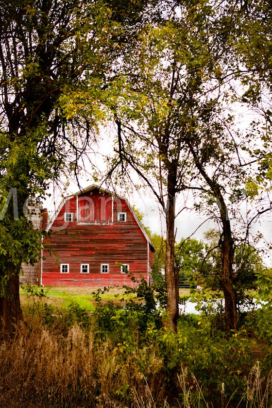 Image of Red Barn Print