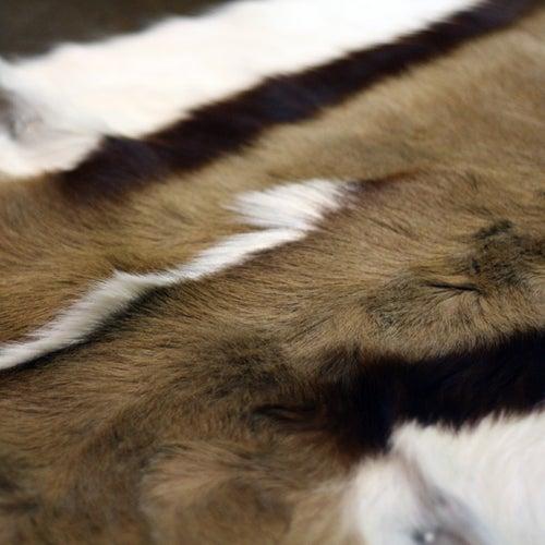 Image of Springbok Hide