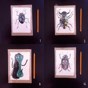 Image of Bugs (A)