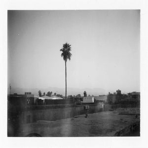 Image of Palm: Polaroids of Marrakech