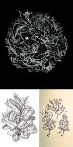 Image of Custom Botanical Sketch