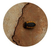 Image of Beetle