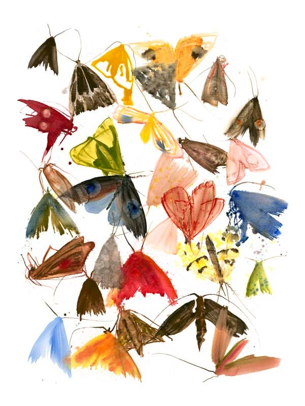 Image of Allyson Reynolds - Moths 6