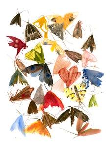 Image of Allyson Reynolds - Moths 6