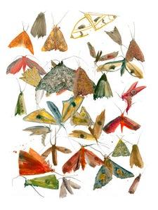 Image of Allyson Reynolds - Moths 2