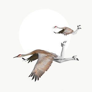 Image of the birds III