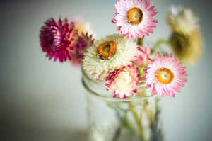 Image of button daisies