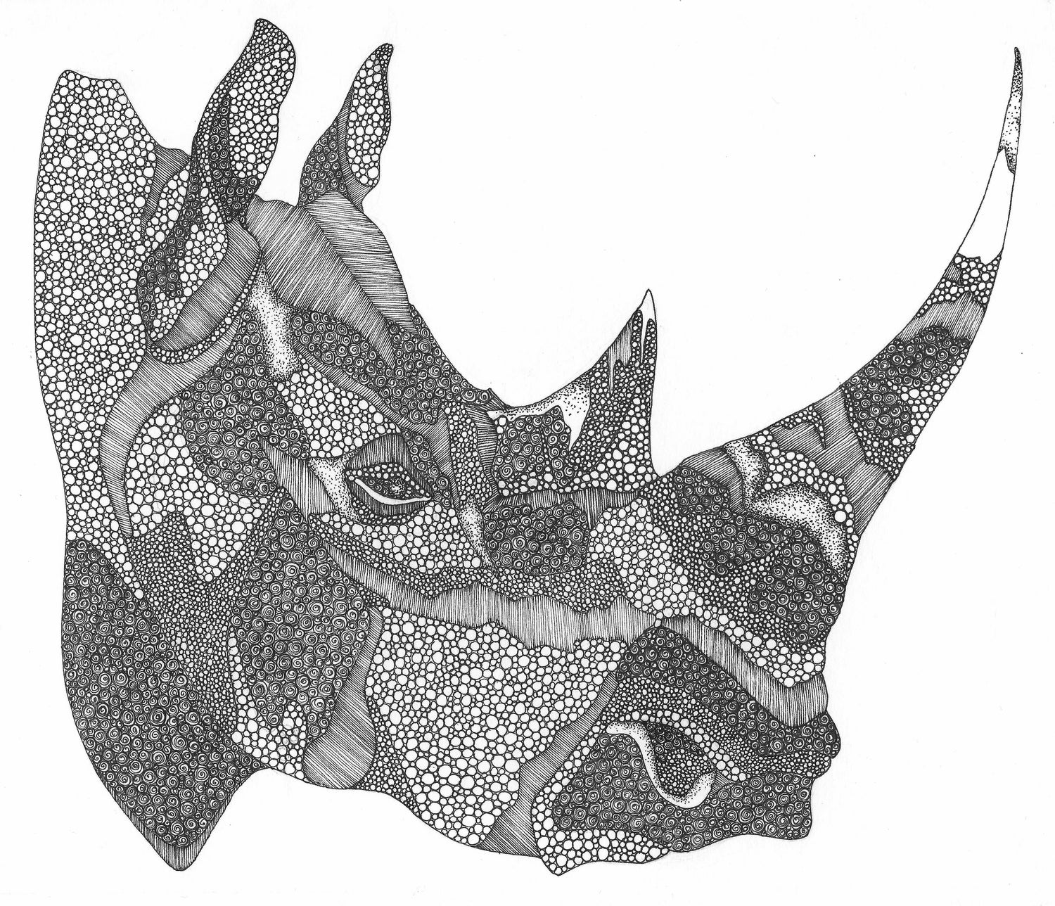 Image of The Square-lipped Rhinoceros