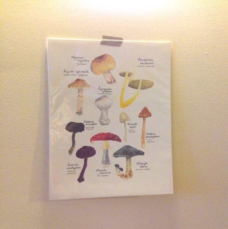 Image of mushrooms print