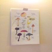 Image of mushrooms print