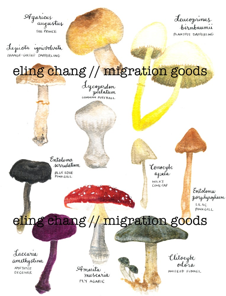 Image of mushrooms postcard/mini-print