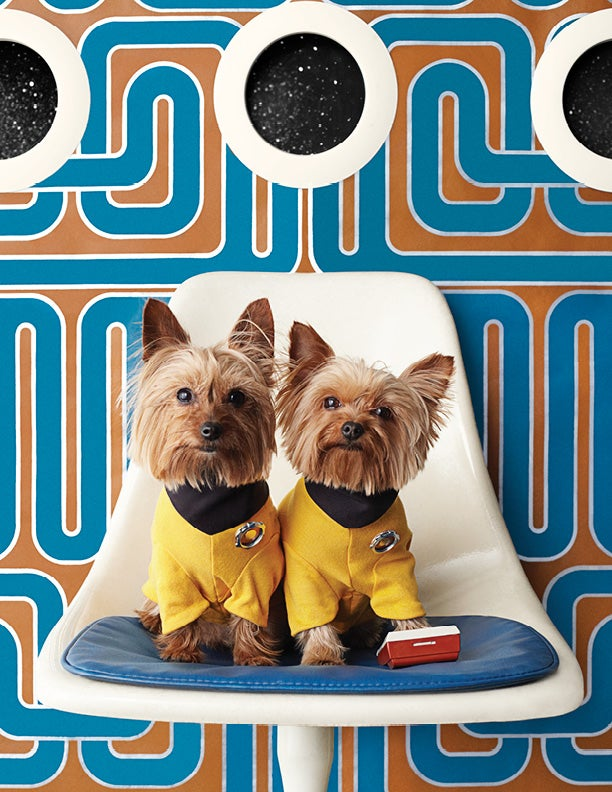 Image of Willy & Leo - Yorkies - Archival Digital C-Print