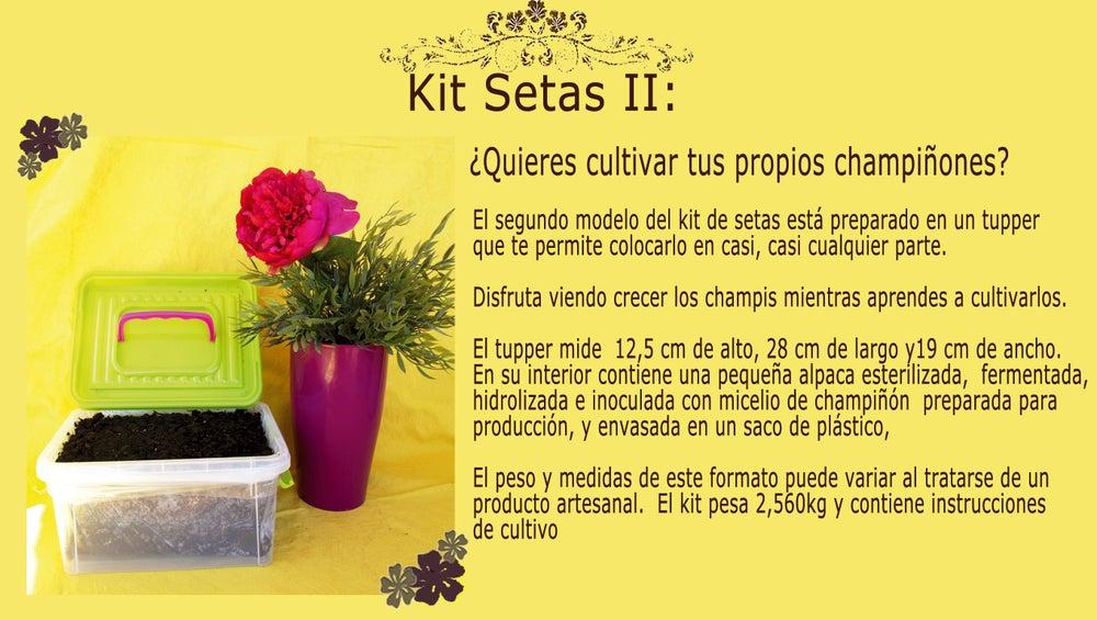 Image of Kit Setas Tupper