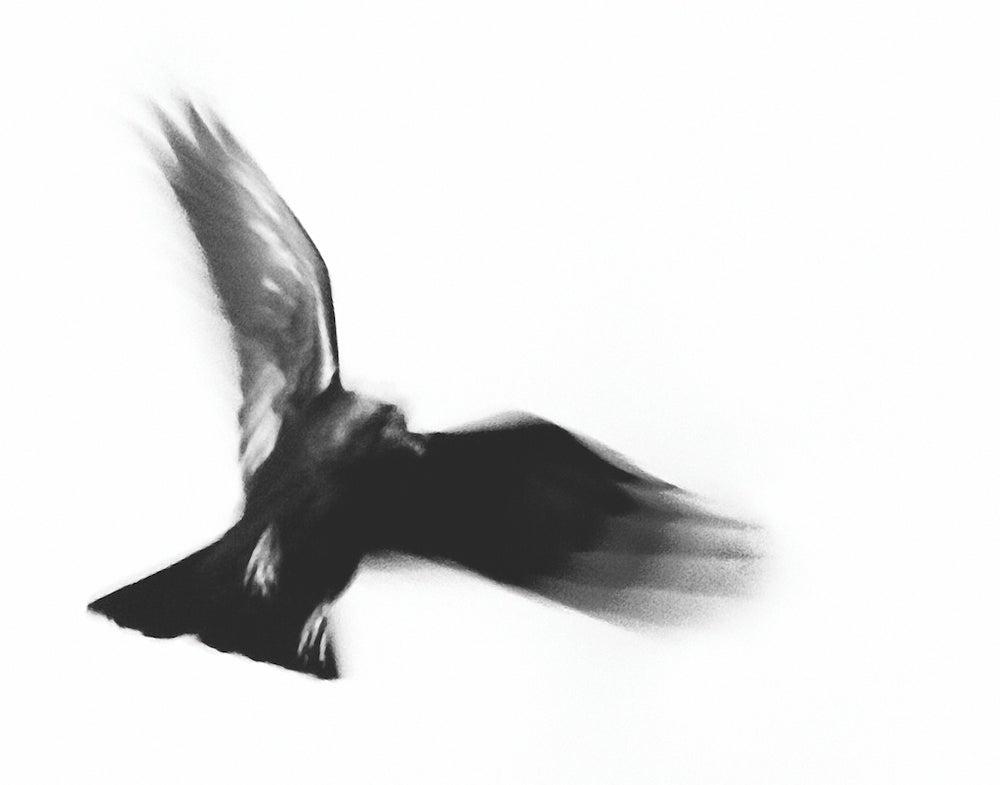 Image of Taos Dark Bird
