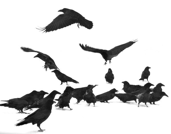 Image of Wyoming Dark Birds
