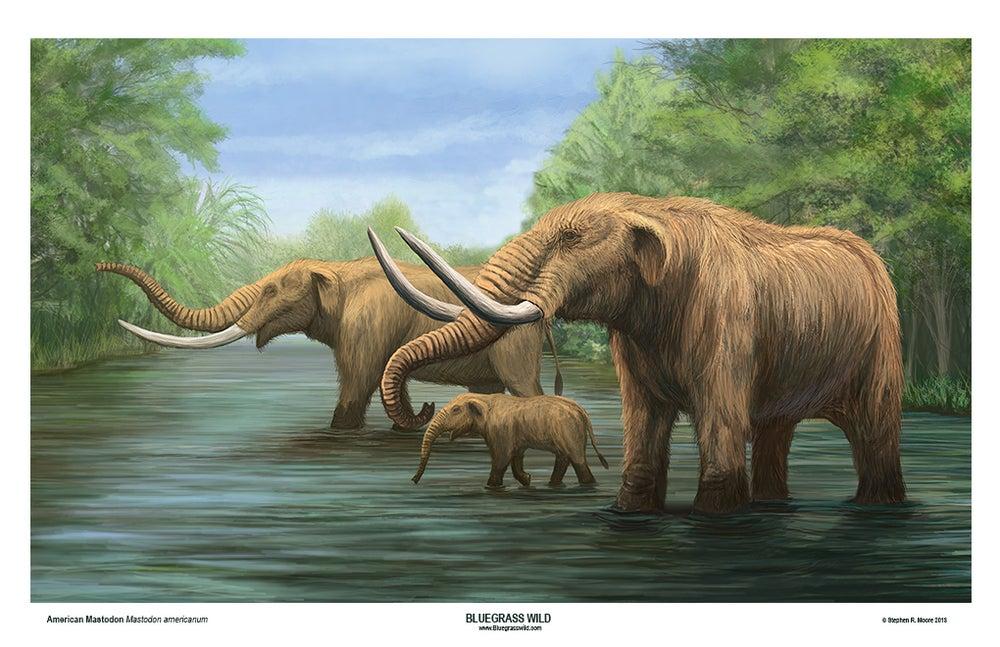 Image of American Mastodon