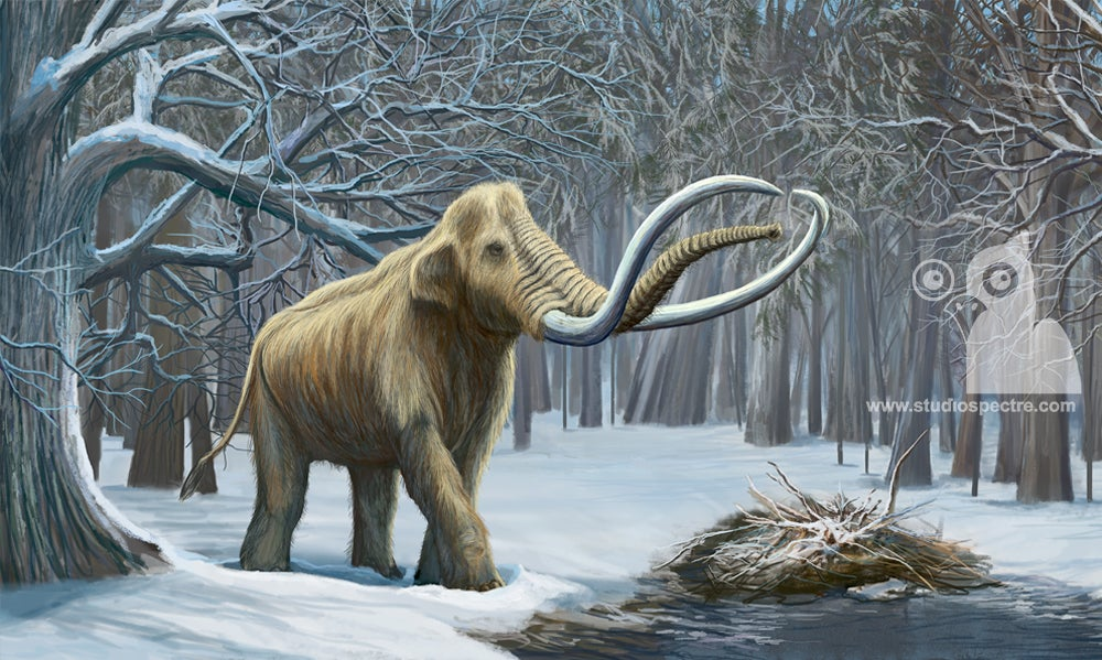 Image of Columbian Mammoth