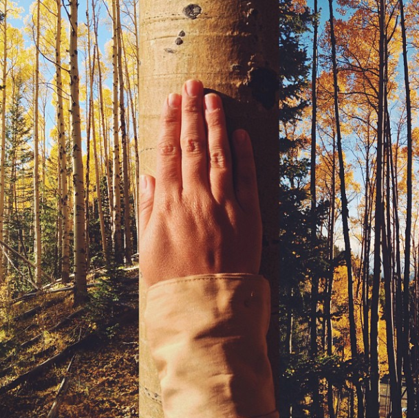 Image of Hand in Aspens
