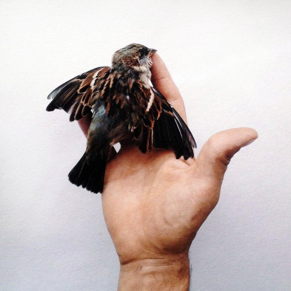 Image of Flightless Bird