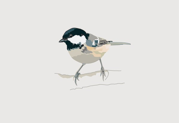 Image of Coal Tit Greeting Card