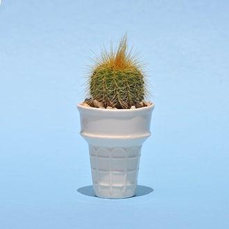 Image of White Prickly Cone
