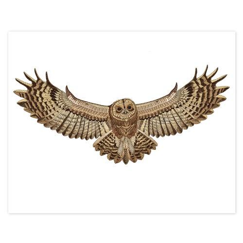Image of Tawny Owl
