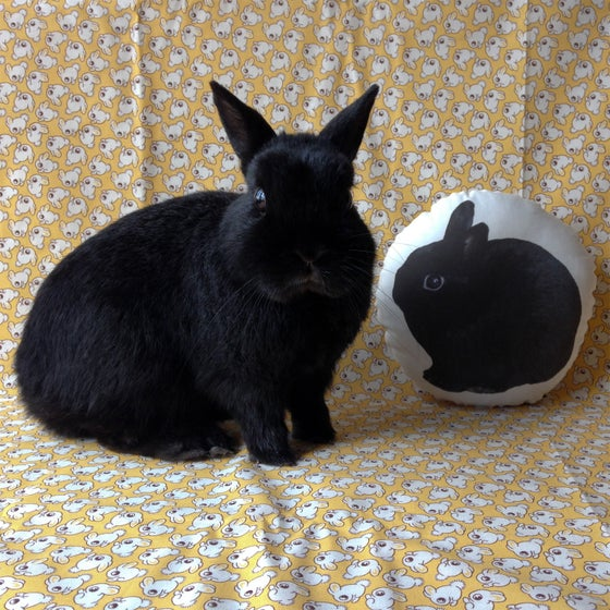 Image of George Bunny Pillow Panel