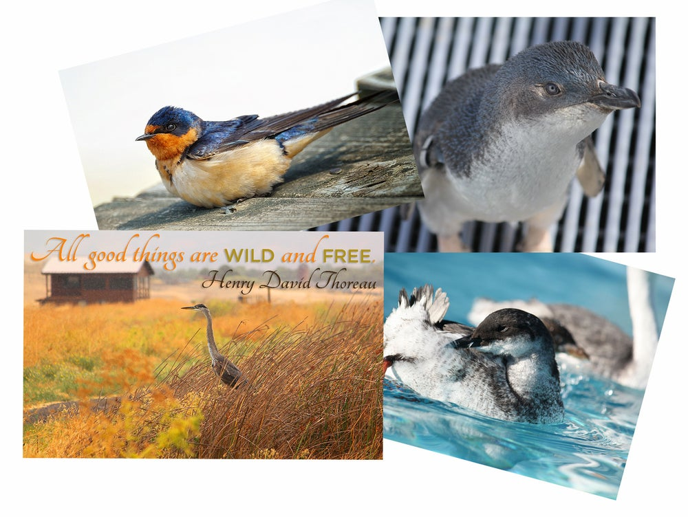 Image of Every Bird Matters Photo Greeting Cards