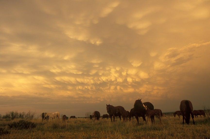 """Wyman Meinzer — """"Momma's Love"""" - 6666's Ranch - Guthrie, Texas"""