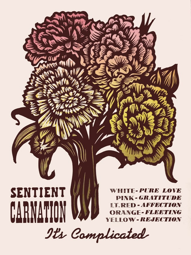 Image of Sentient Carnation