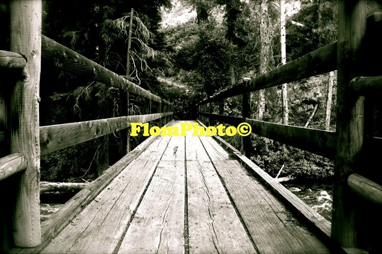 Image of Forest Bridge