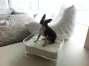 Image of Acrylic Dog Bed UK