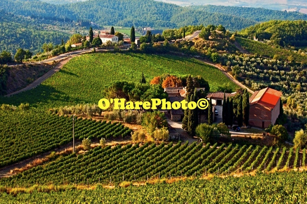Image of SIENA VINEYARDS • Custom Framed