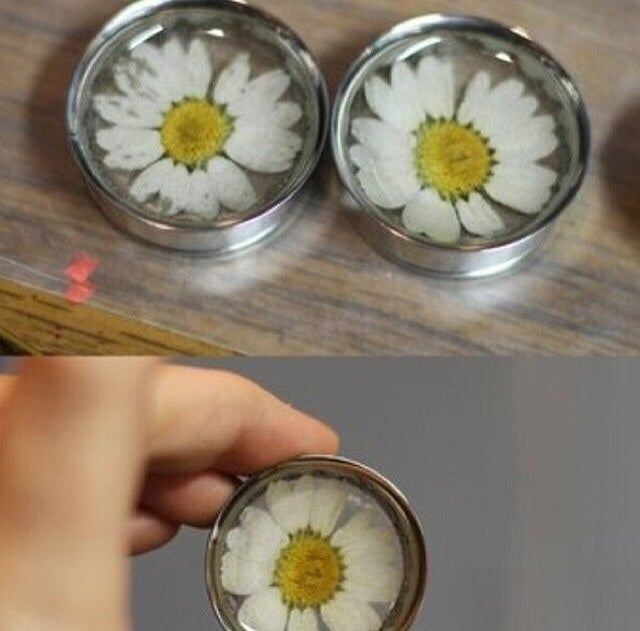 "Image of Real Daisy Plugs (sizes 7/8-2"")"
