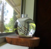 Image of 3x4 Biosphere Desktop Aquarium With Hawaii Ohia Wood Stand No Care Required !