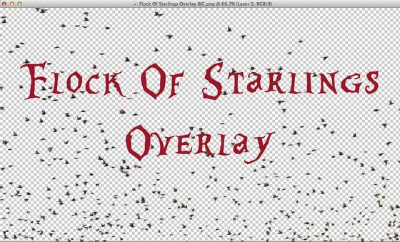 Image of Flock Of Starlings Overlay
