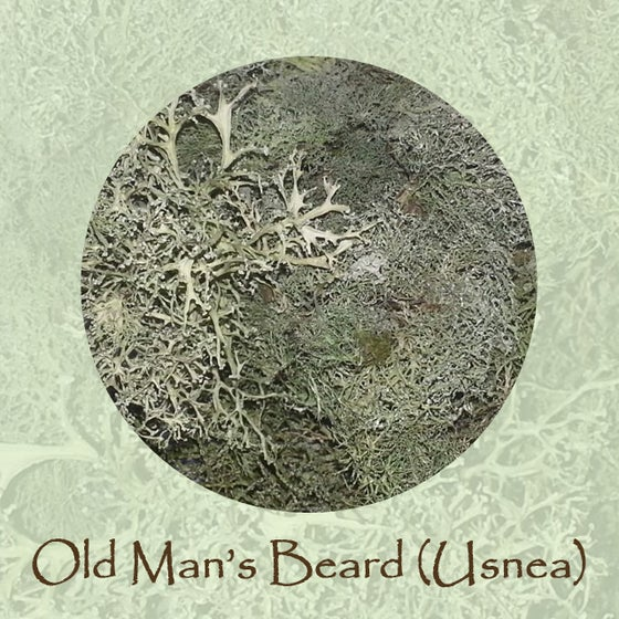 Image of Old Man's Beard (Usena)