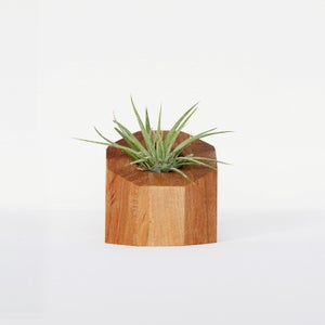 Image of Air Plant Holder - Octagon Natural - <i>Plant Included</i>