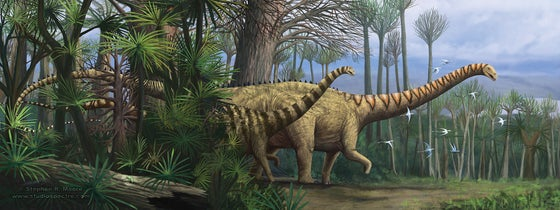 "Image of ""2 beams"" Diplodocus carnegii"