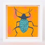 Image of Beetle on Tangerine