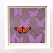 Image of Butterflies on Lilac