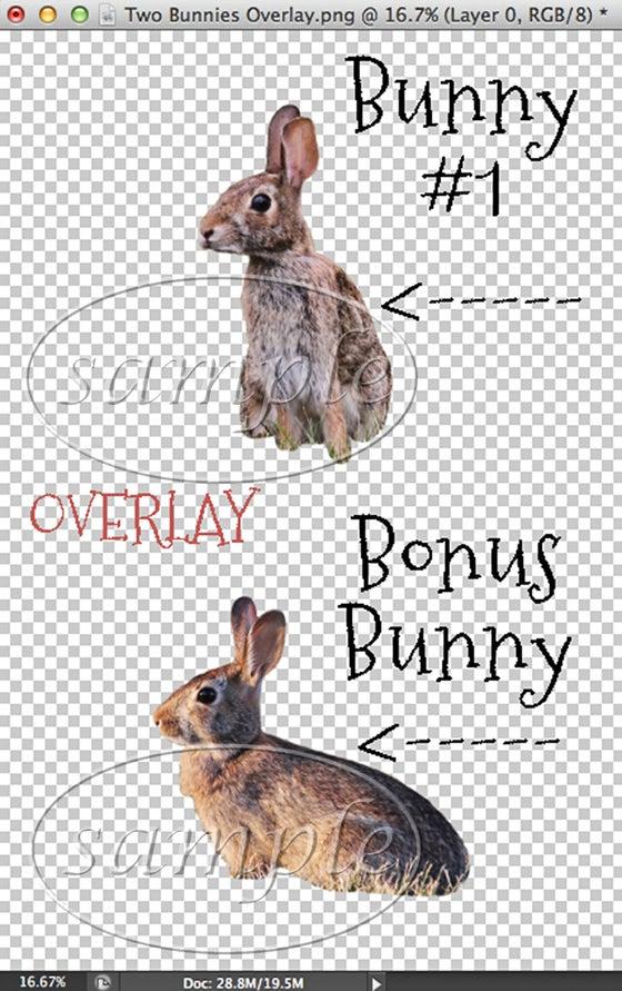 Image of Two Bunnies Overlay