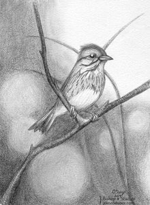 Image of Lincoln Sparrow - Original Graphite Drawing - 6 x 8